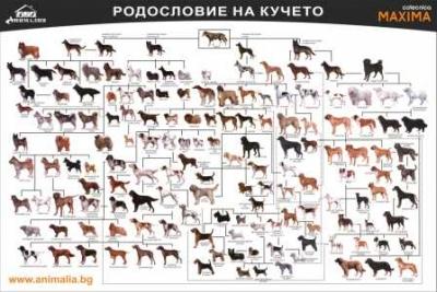 Плакат Родословие на кучето 70/50 см