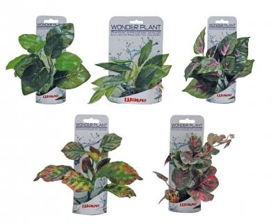 Изк.растение Wоnder plant 15-18 см