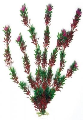 Изк.растение Flora bicolour 18 см